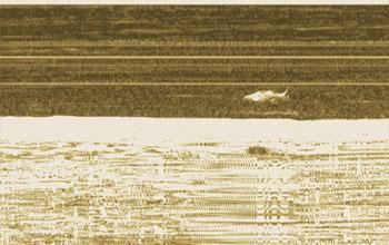 Лови рыбу с пристани - DownScan